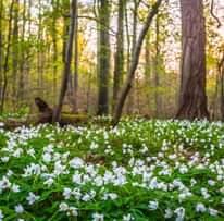 A spring awakening – an Ayurvedic selfca